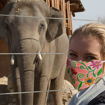 elephant and guest