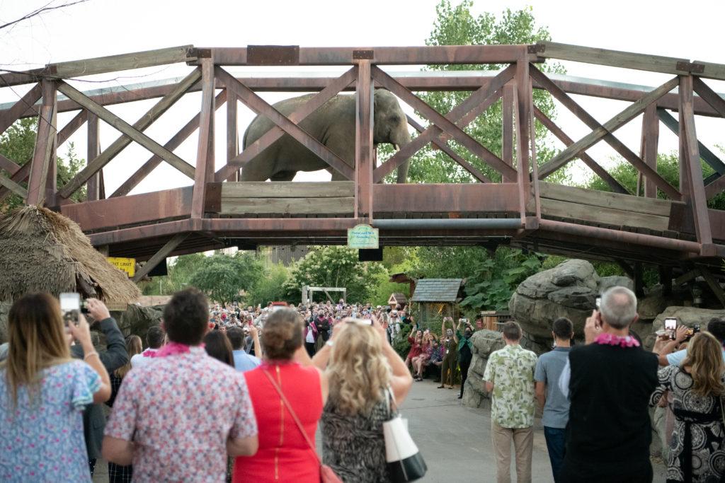 Flock Party at the Denver Zoo.  Photo by Ellen Jaskol. Sept 12, 2020.